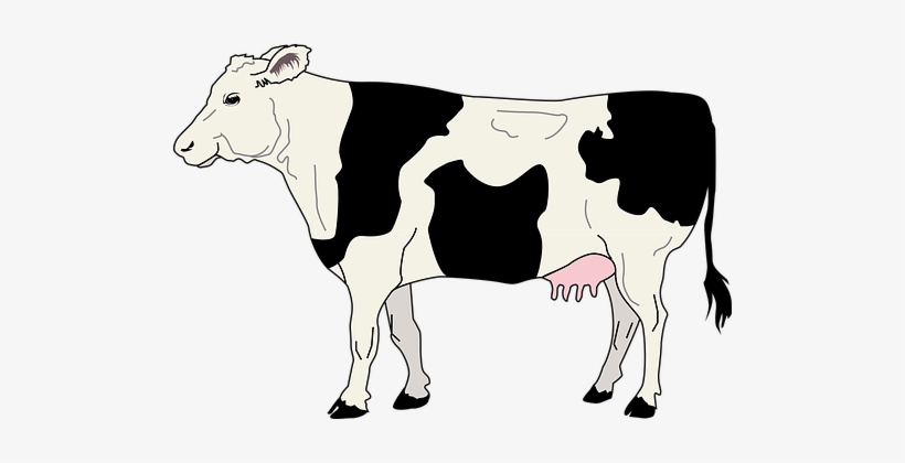Cow Livestock Cattle Farm Animal Beef Dair Side Of A Cow Transparent Png 506x340 Free Download On Nicepng