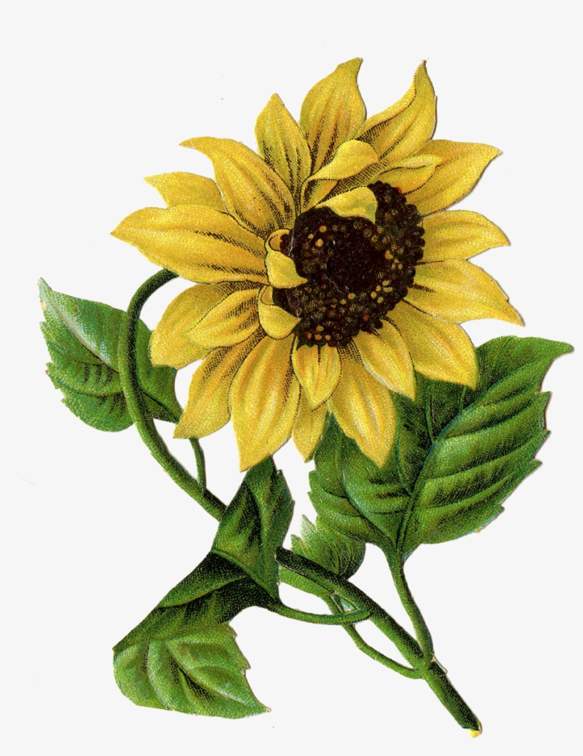 7bf9126aaa745 Items Similar To Vintage Image Of Sun Flower - Vintage Sunflower Art ...