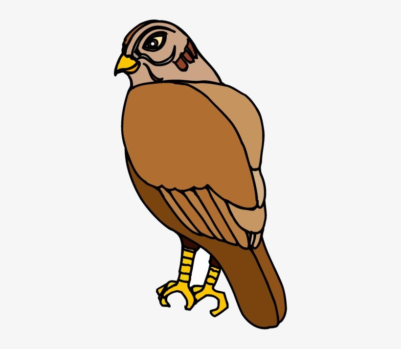 Hawk Head Image Transparent & Png Clipart Free Download - Beer Hawk Logo  (#5546511) - PinClipart