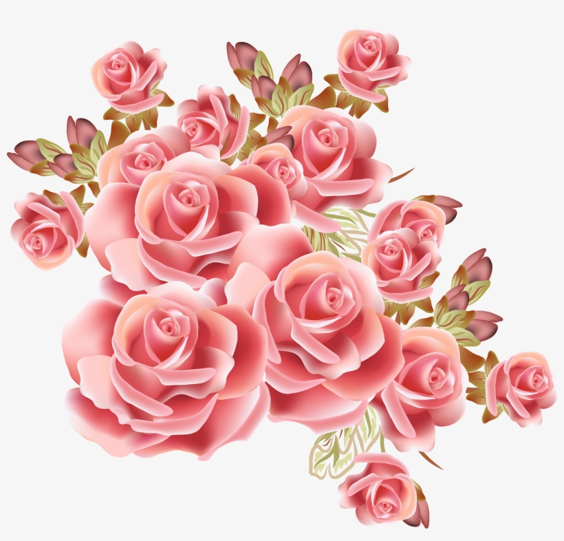 Rose Flower Drawing Stock Photography Pink Rose Vintage Png