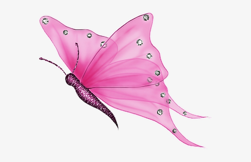 Pink Transparent Butterfly Gif Transparent Png 566x450 Free Download On Nicepng