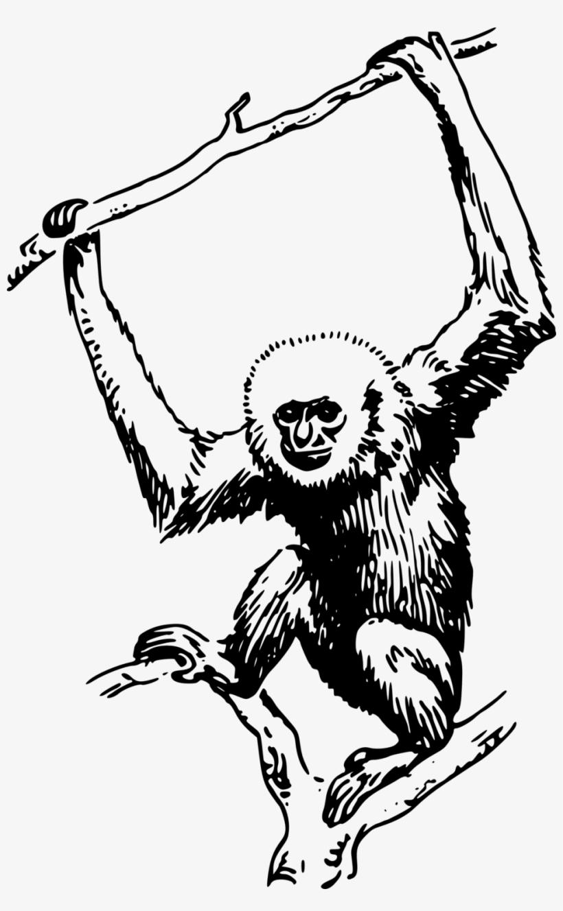 Gambar Monyet Animasi Png Ape Gambar Monyet Hitam Putih Transparent Png 958x1505 Free Download On Nicepng
