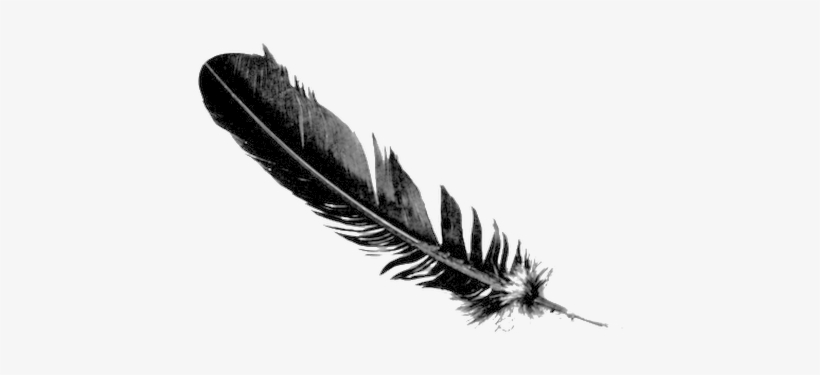 Photo Erin Wasson Feather Tattoo Transparent Png 530x354 Free Download On Nicepng