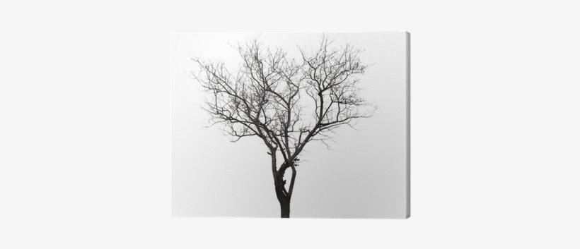 Leafless Tree Isolated On White Canvas Print • Pixers® - Pintura De ...