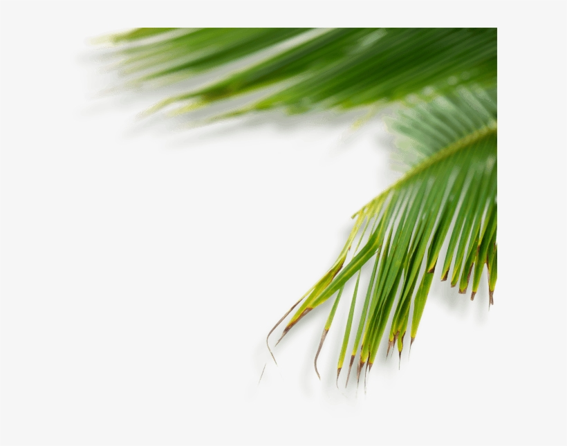 Green Tumblr Plant Png Transparent PNG - 619x565 - Free