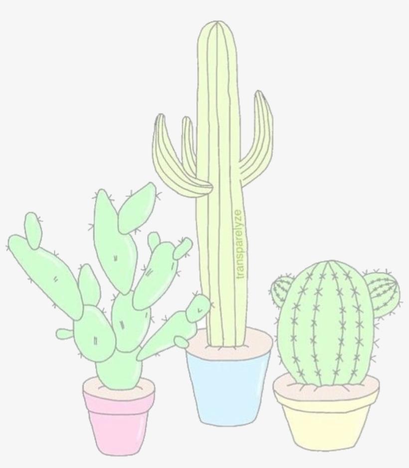 Aesthetics Overlays Cacti Tumblr Drawings Cute San Pedro