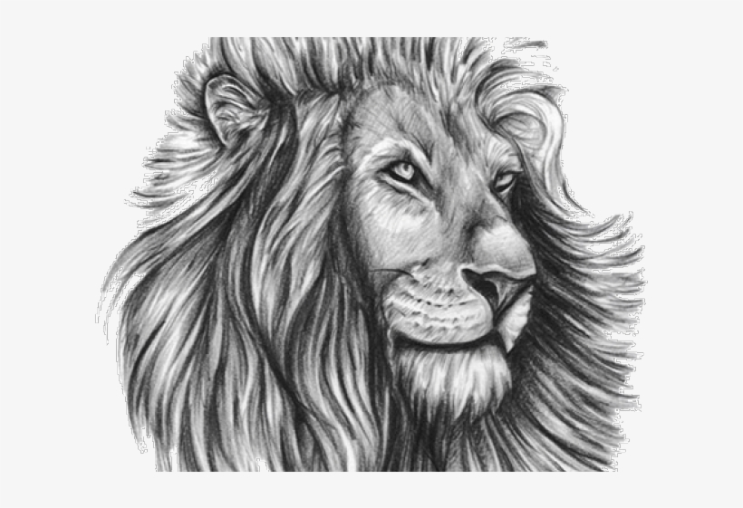 Lion Tattoo Png Transparent Images Lion Tattoo Design Template Transparent Png 640x480 Free Download On Nicepng It's just an outline, but this side view of the lion is an elegant design that looks great as a shoulder tattoo. lion tattoo png transparent images