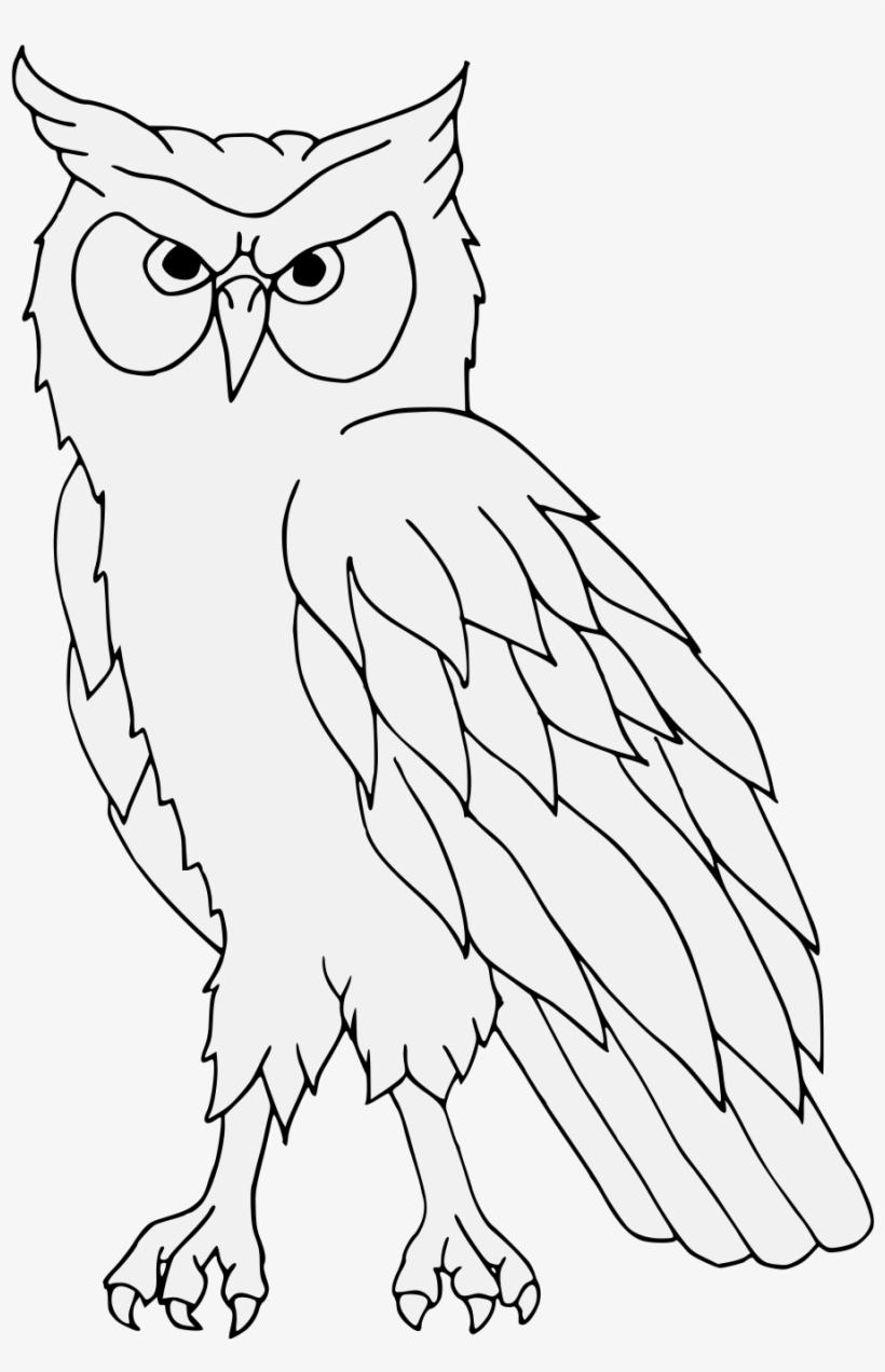 Details Gambar Burung Hantu Hitam Putih Transparent