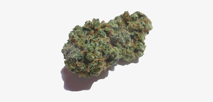 Weed Blunt Mlg Mlg Weed Png Transperent Transparent Png 500x375