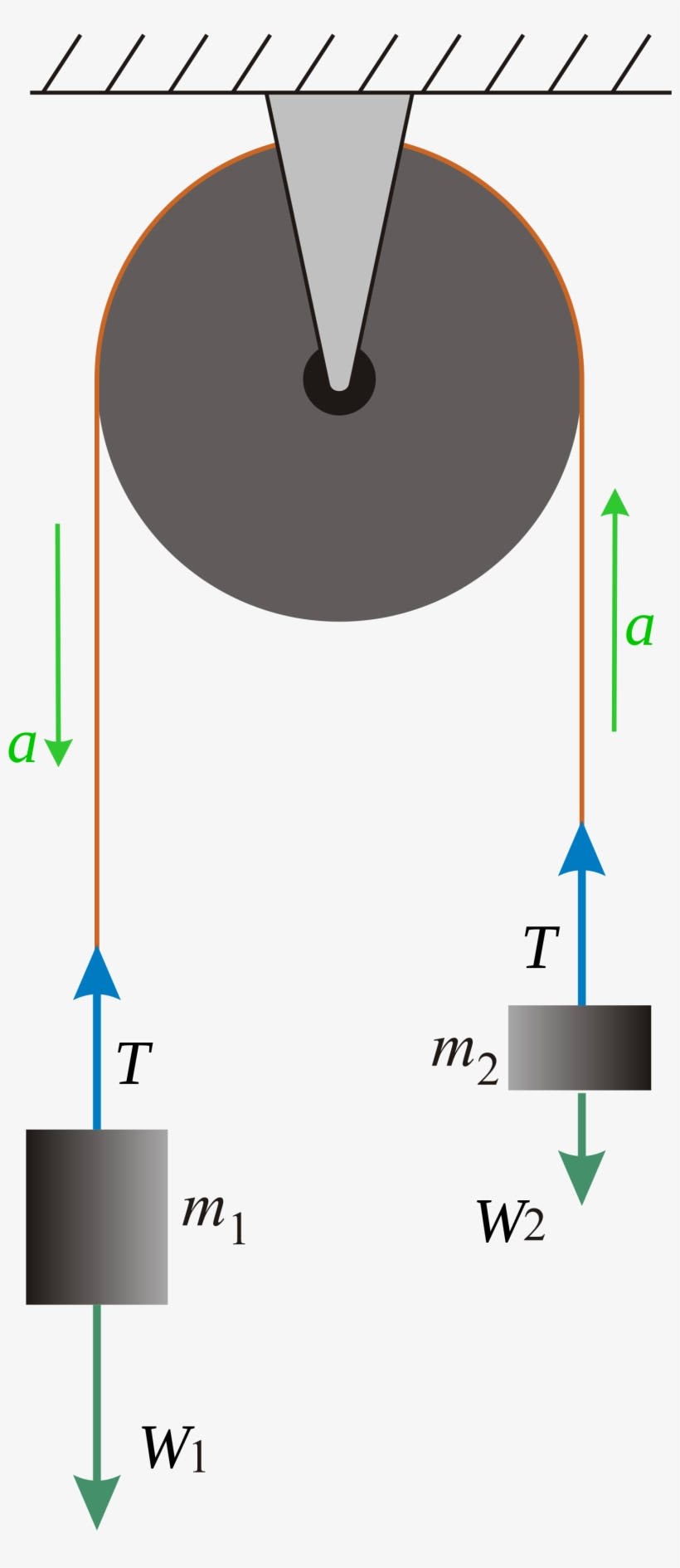 the free body diagrams of the two hanging masses of - newtons third law  pulley system