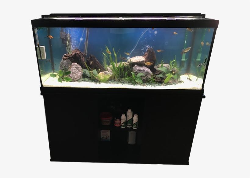 Fluval Anubias Plant for Aquarium 8-Inch