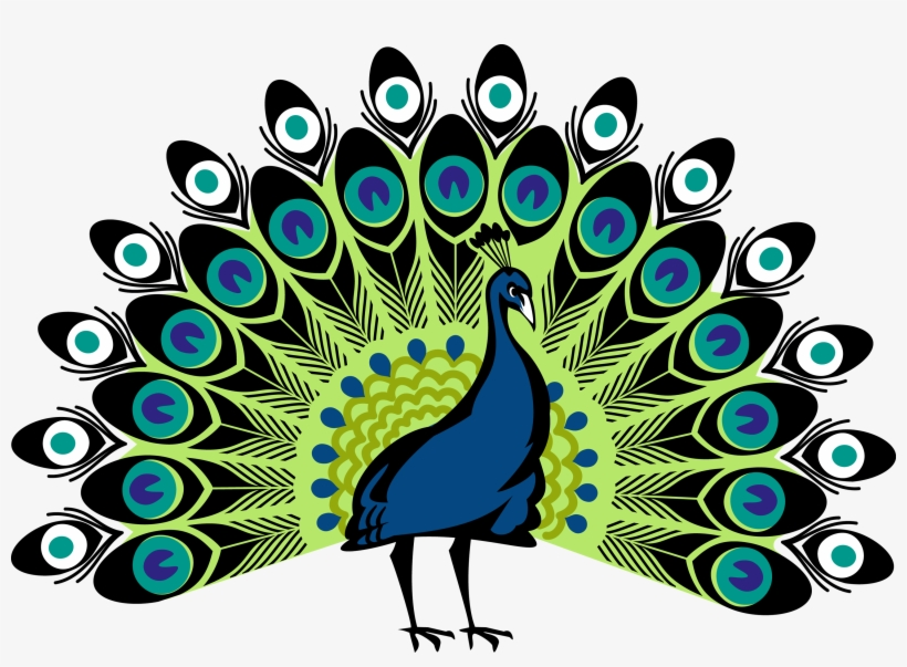 Peacocks Simple Colorful Peacock Drawing Transparent Png 3000x2063 Free Download On Nicepng