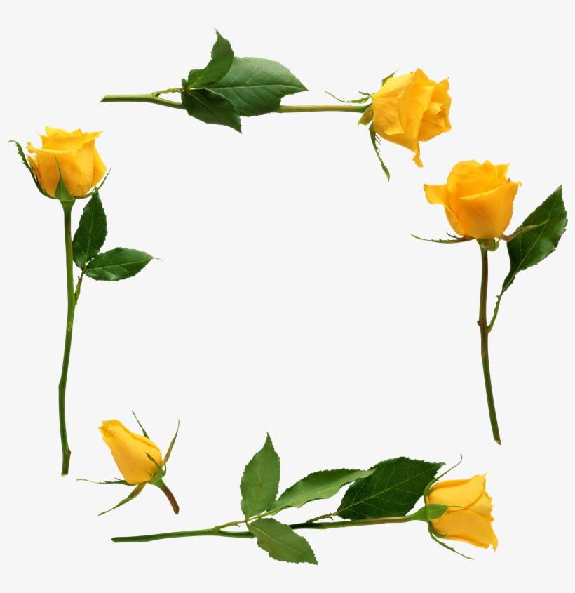Para Adornar Marcos Photoscape Photoshop Y Gimp Flores Yellow Rose