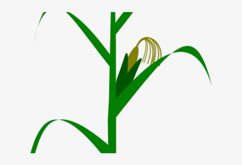 Corn Plant Cliparts Milpa De Maiz Vector Transparent Png