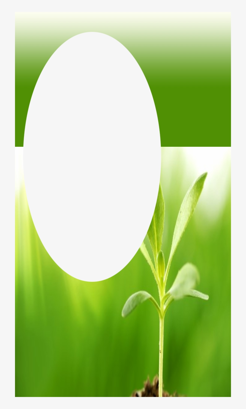 green nature frame natural frame png transparent png 720x1280 free download on nicepng green nature frame natural frame png