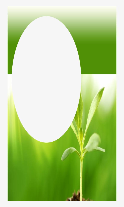 green nature frame natural frame png transparent png 720x1280 free download on nicepng green nature frame natural frame png