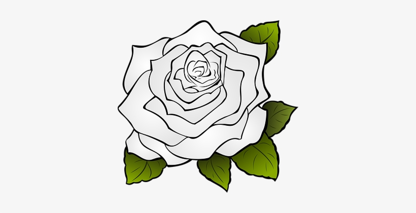 Gardenia Drawing White Rose Bunga Mawar Icon Png Transparent Png