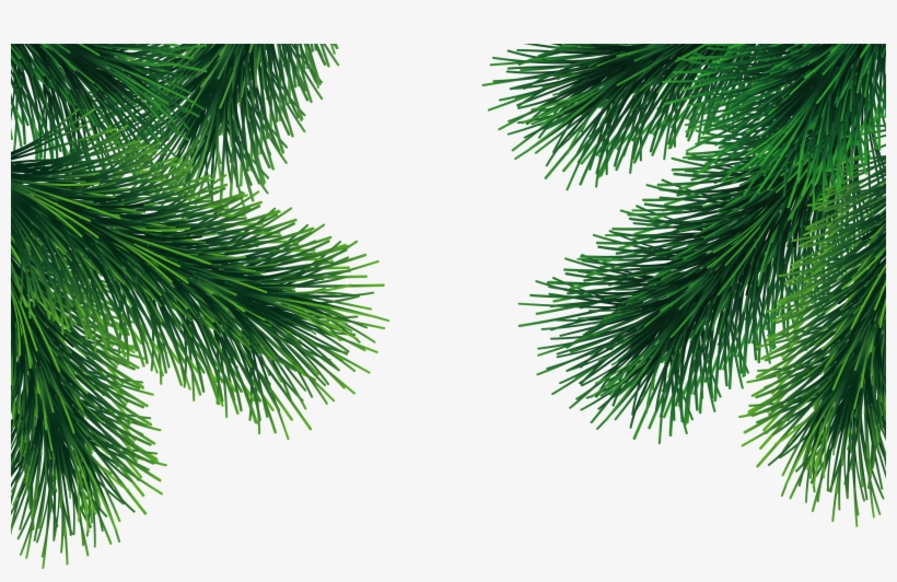 Christmas Branch Png.Christmas Tree Branch Png Transparent Png 1732x1041 Free