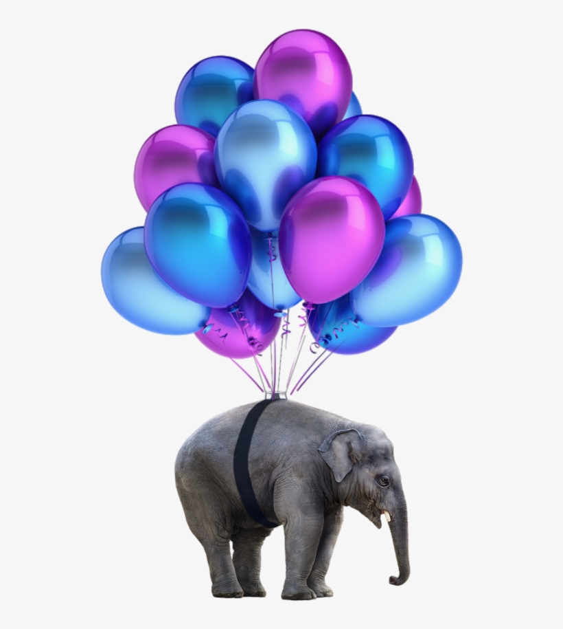 Elephant Png Nobackground Balloons Baloes Roxo Png Transparent Png 1024x1199 Free Download On Nicepng Download and use them in your website, document or presentation. elephant png nobackground balloons