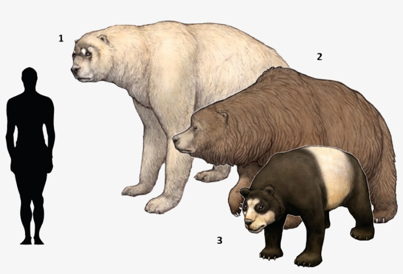 Extinct Clipart Ice Age Animal Short Faced Bear Cave Bear