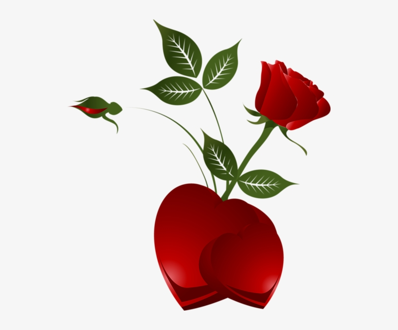 Transparent Rose Heart Png Clipart Picture Red Rose And Hearts Transparent Png 542x600 Free Download On Nicepng