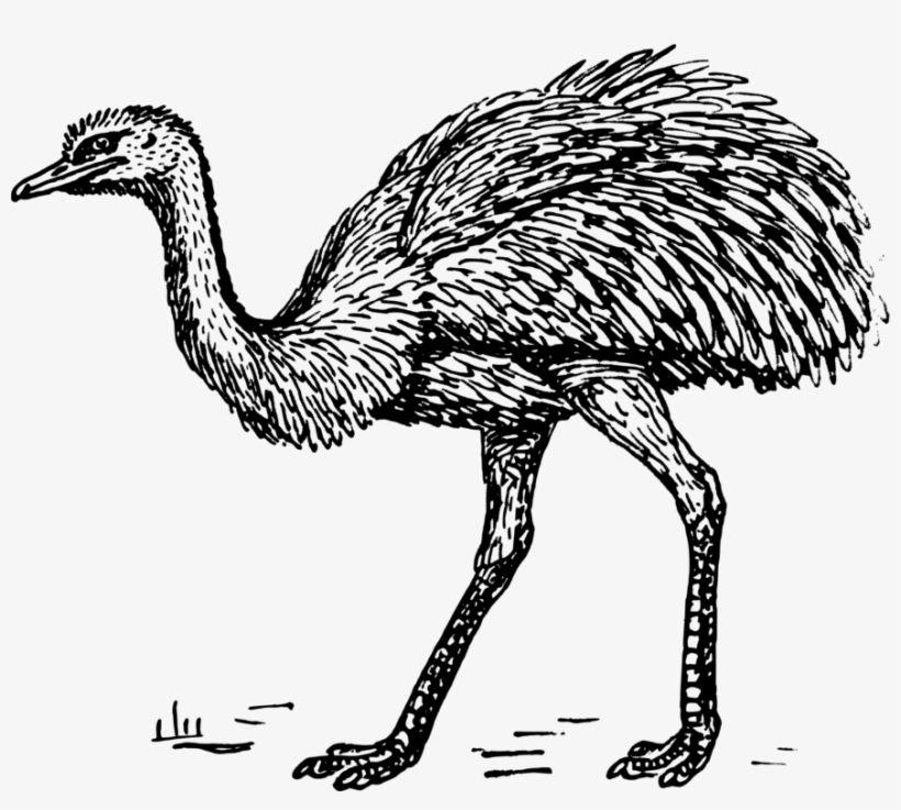 Common Ostrich Drawing Greater Rhea Emu Computer Icons ...