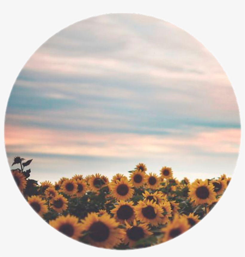 Icon Icons Tumblr Girasol Flores Flowers Forget Those Who Forget