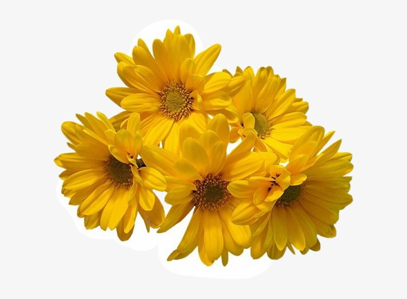 Freetoedit Flower Daisy Filler Aesthetic Tumblr Yellow Flowers