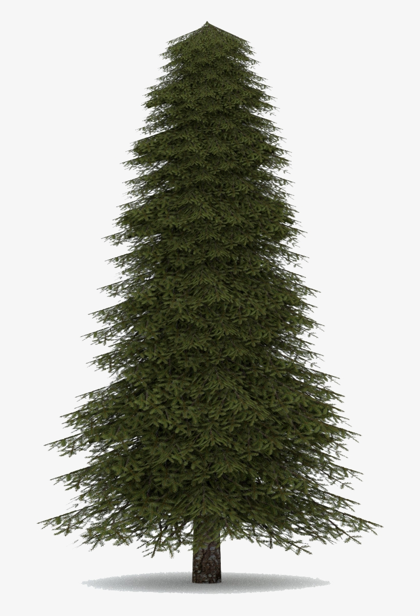 Fir Tree Realistic Christmas Tree Transparent Png 1200x1200 Free Download On Nicepng With these christmas tree png images, you can directly use them in your design project without cutout. fir tree realistic christmas tree