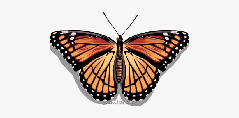 Butterfly Royalty Free Vector Clip Art Illustration Mariposa Monarca Para Recortar Transparent Png 480x326 Free Download On Nicepng