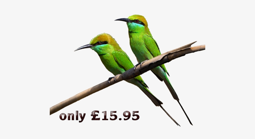 Early Birds Promotion - Green Birds Transparent PNG
