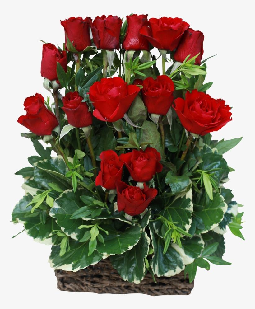 15 Red Rose Arrangement Auguri Di Buon Compleanno Silvana