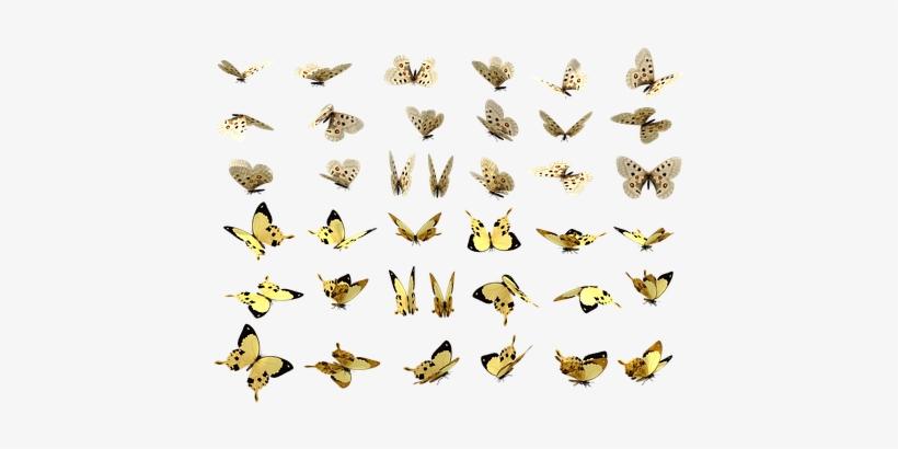 Butterfly, Butterflies Swarm, animals, swallowtail Butterfly png | PNGEgg