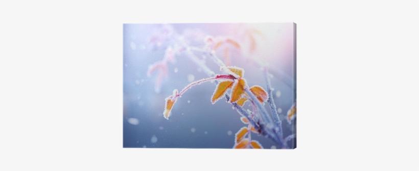Winter Nature Background - Leaf Transparent PNG - 400x400