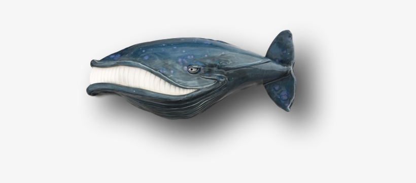 "Baby "" - Sailfish Transparent PNG - 578x578 - Free Download on NicePNG"