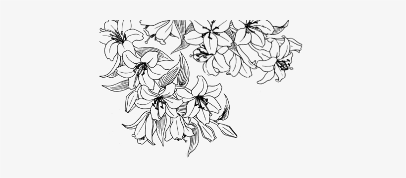 28 Collection Of Tumblr Flower Drawing Transparent White Flower