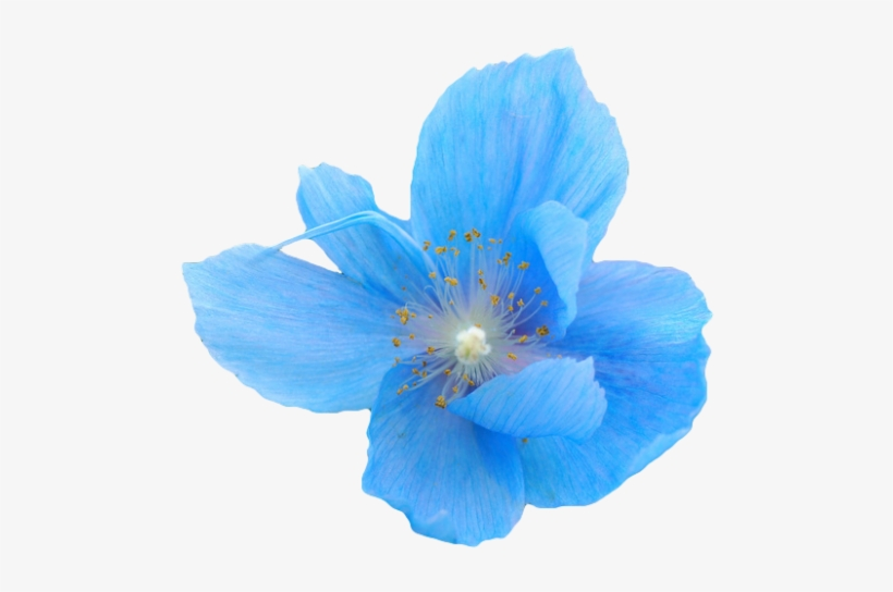 Flower Png Tumblr Flowers Blue Flower Transparent Background