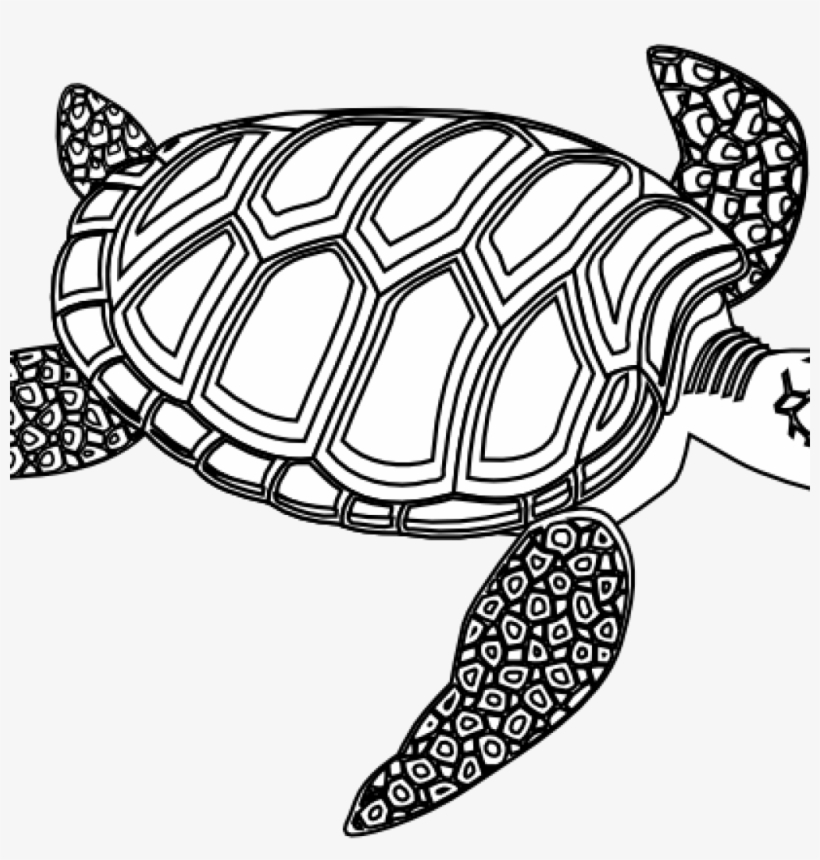 Sea Turtle Clipart Black And White Winter Clipart Hatenylo Clip Art Sea Turtle Transparent Png 1024x1024 Free Download On Nicepng