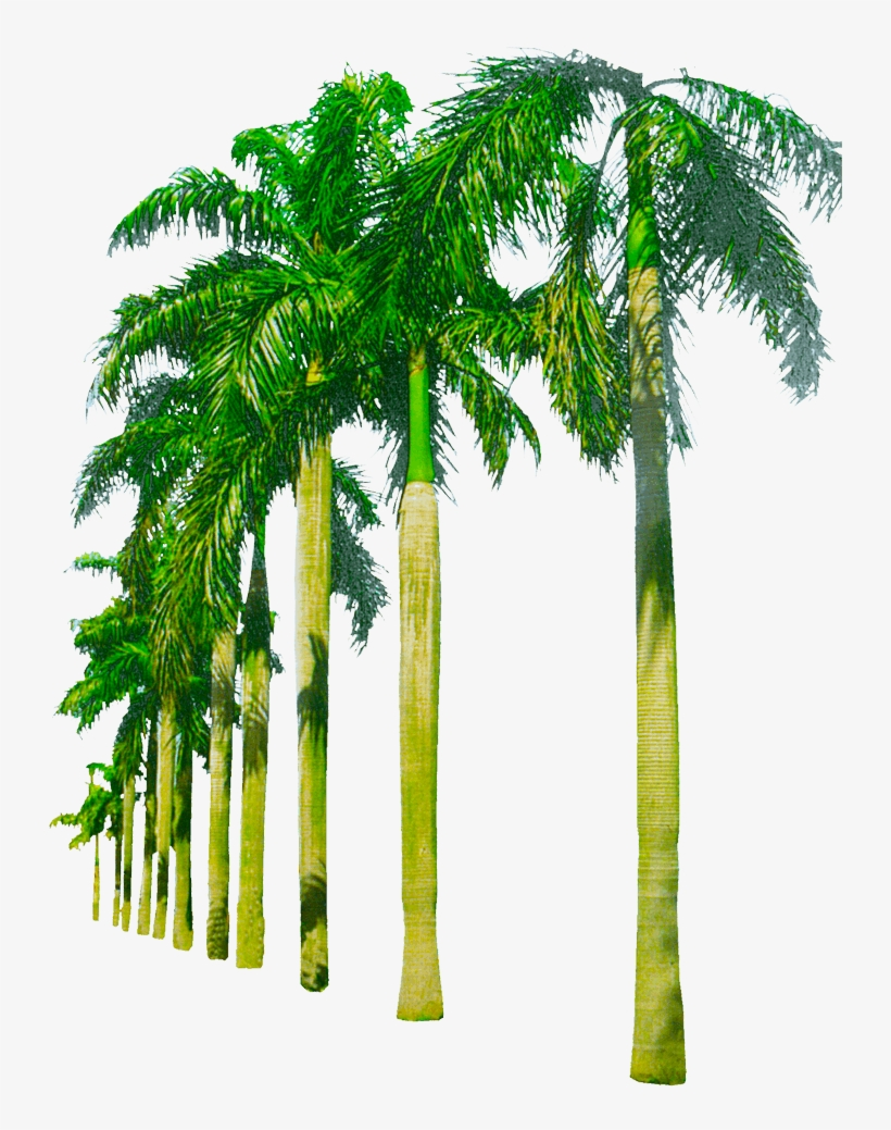 Youtube Thumbnail, Tree Images, Palm Tree Png, Background - Png