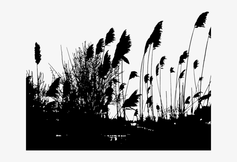Reed Clipart Silhouette Reeds Silhouette Png Transparent Png 640x480 Free Download On Nicepng