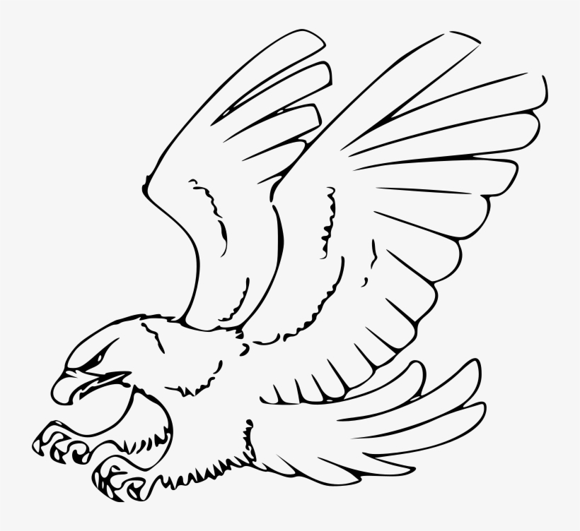 how to draw a hawk  red-tailed hawk - eagle clipart black and white transparent png