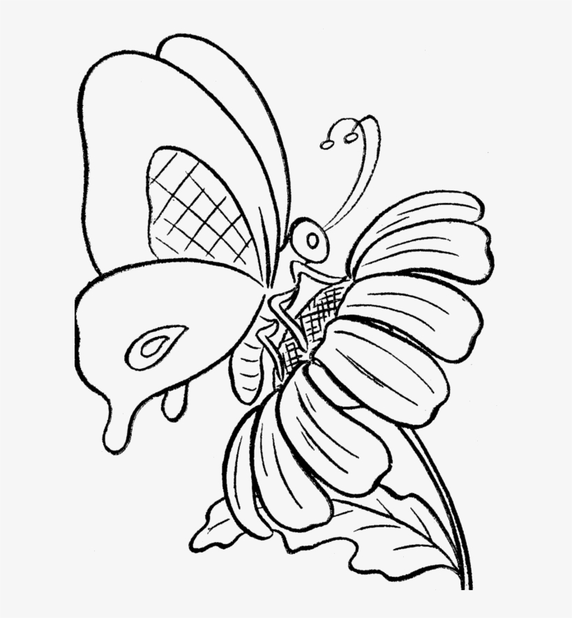 Butterfly And Sun Flower Coloring Print - Drawing Of A Butterfly On