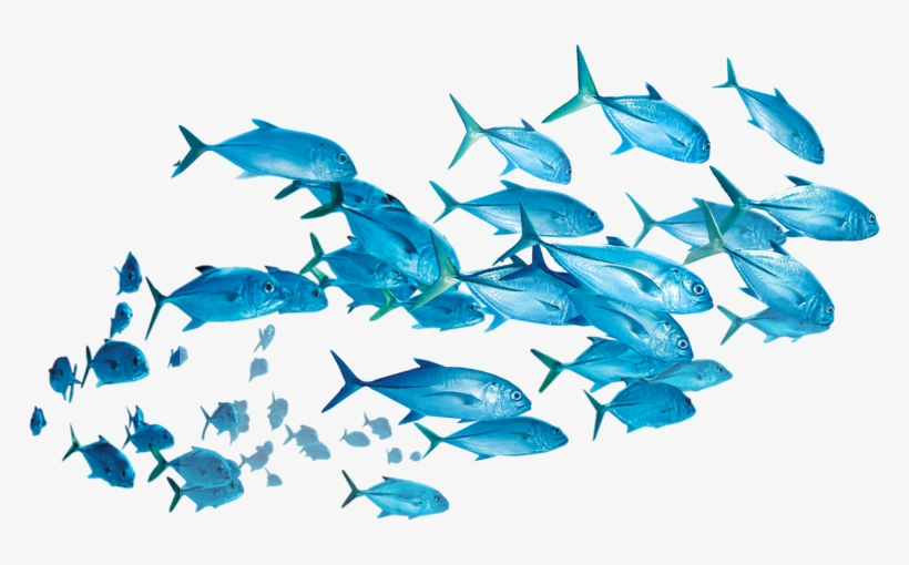 Fishes Png Picsart Fish Png Transparent Png 768x430 Free Download On Nicepng