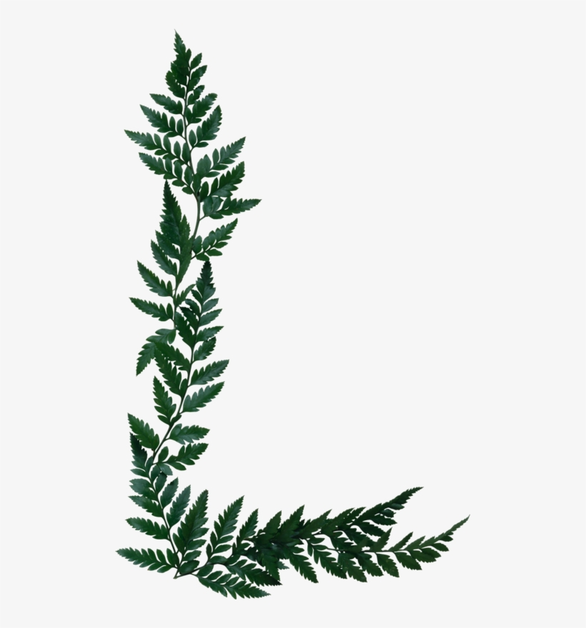 Fern Clipart Olive - Silver Fern Page Border Transparent PNG