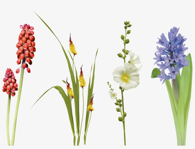 Free Flower Leaf Grass Photo Overlays, Overlay For - Overlay