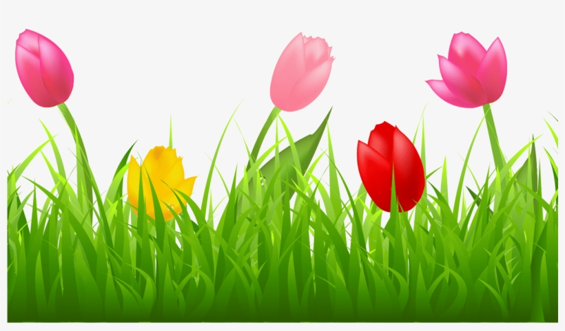 Grass With Colorful Tulips Png Clipart Spring Pinterest ... Tulips Border Clipart