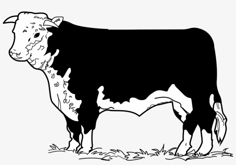Cow beef. Clipart drawing clip art
