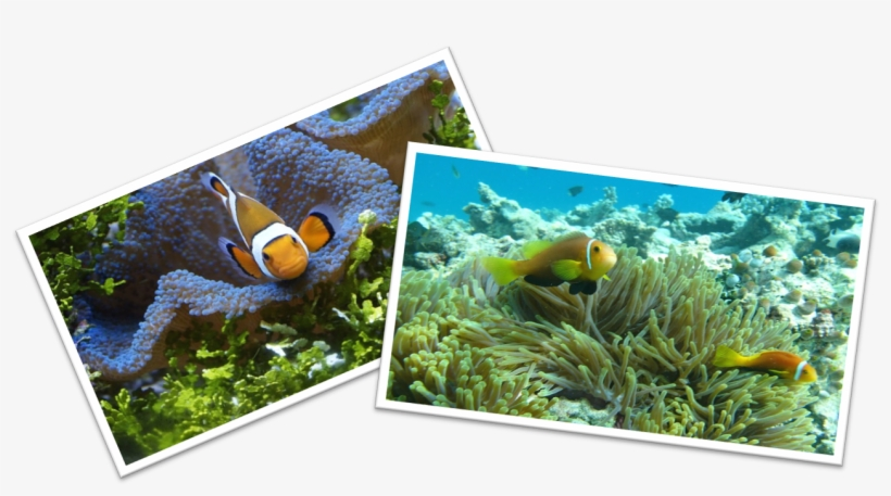 Maintaining Clown Fish Tank Portable Network Graphics Transparent