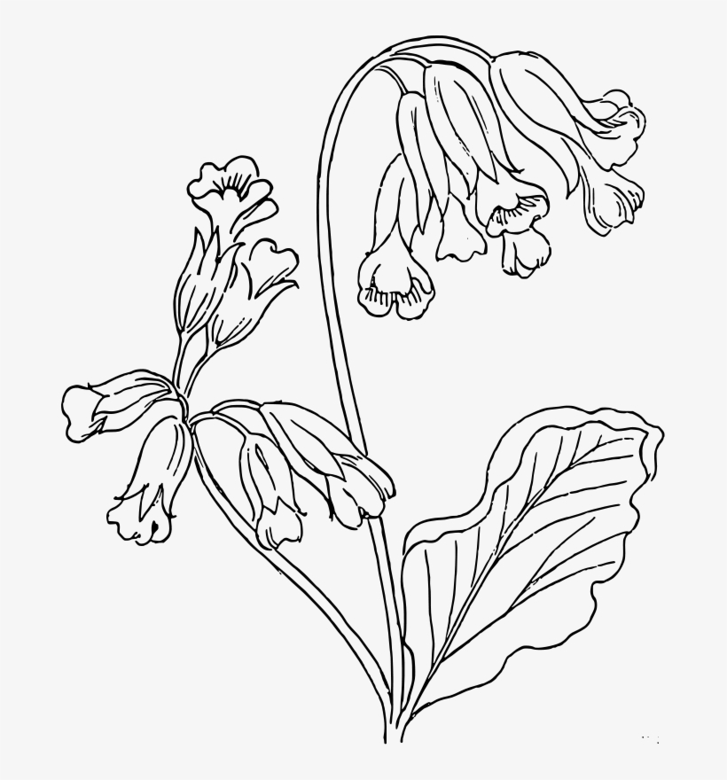 Flower Clipart Black And White Transparent