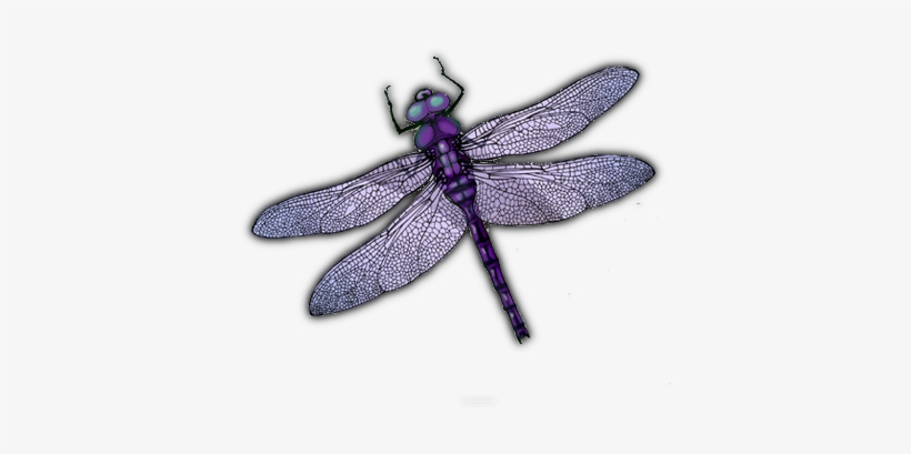 Dragonfly Wings Png Download Portable Network Graphics